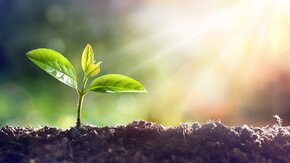 5 December: World Soil Day - Restore the soil, save the climate