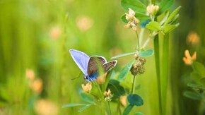 Improving Biodiversity in Haarlem