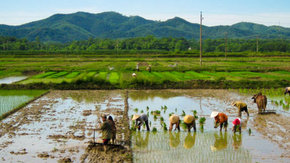Cleaning up pesticides in Vietnam